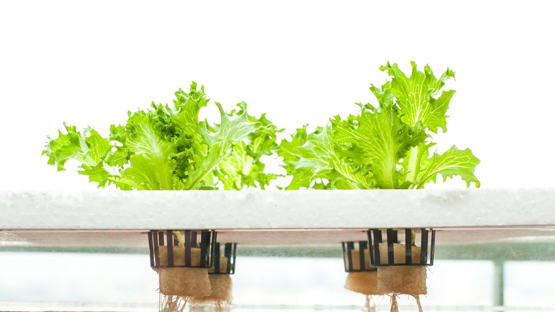 Hidroponsko gojenje rastlin
